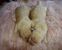2 yellow girls